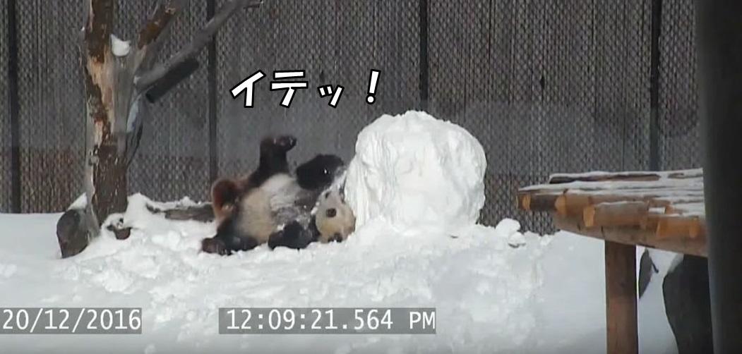 パンダvs雪だるま